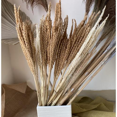 Foto Produk Dried Pampas Wheat/ Gandum Kering Panjang dari BellesFleursETC