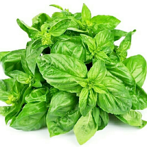 Foto Produk daun basil segar 250gr dari lapak sayur fresh
