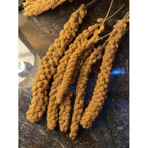 Foto Produk Foxtail millet spray hamster bird burung snack treats sehat (lokal) - Isi 3 tangkai dari Miracle.Store