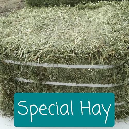 Foto Produk Repack Special Hay - Timothy Hay 1 lb dari Fit-bunny Feed