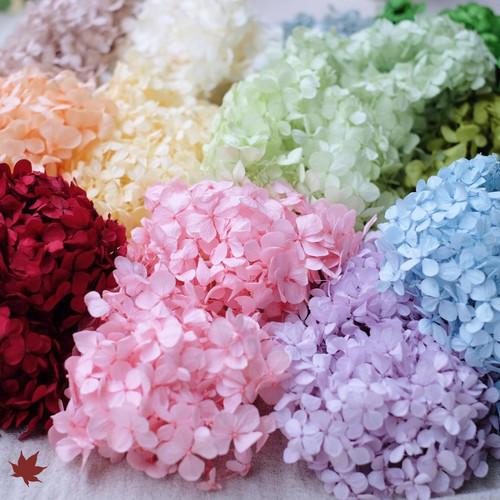 Foto Produk Preserved Hydrangea | Florever | Bunga Alami diawetkan - Pearl white dari PREFLEUR ONLINE