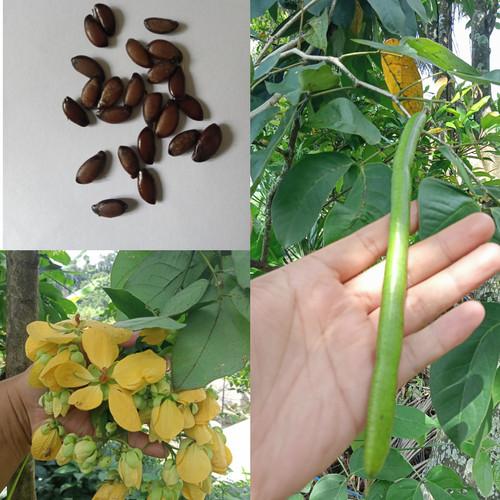 Foto Produk Benih Kembang Simeut Bunga Walang dari Tanaman Herbifarma