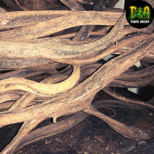 Foto Produk Kayu Trinil ukuran S untuk enclosure dari Dunia Anura