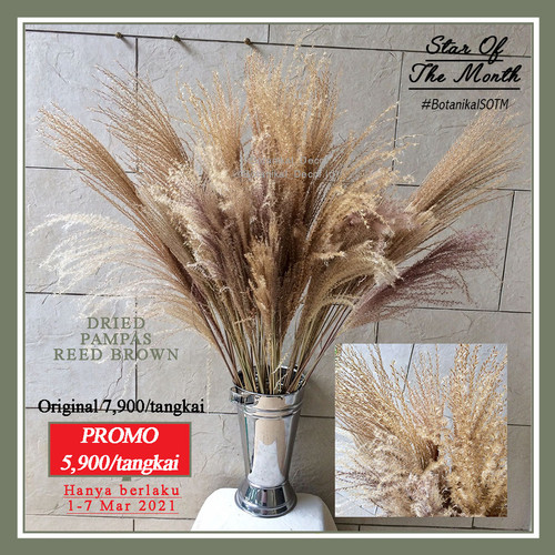 Foto Produk Dried Pampass Reed Grass Brown Pampas Kering Coklat Natural Decor - M dari Botanikal_Decor.id