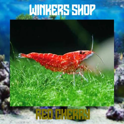 Foto Produk udang hias red cherry aquascape dari winkers_shop