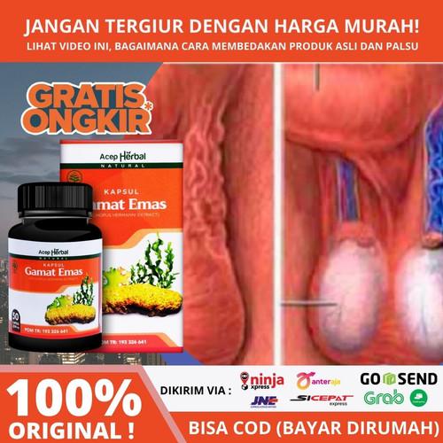 Foto Produk Obat Varikokel, Nyeri Buah Zakar Sebelah - Kapsul Gamat Emas ORIGINAL dari Devi Herbal Indonesia