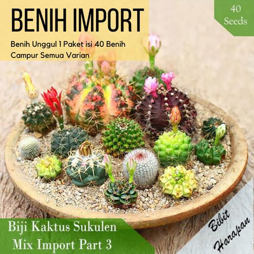Foto Produk Benih Bibit Biji Kaktus Succulent Sukulen Mix Import Part 3 isi 40 - Part 3 dari Bibit Harapan