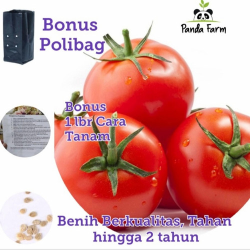 Foto Produk [isi 20] Benih Biji Bibit Tomat Unggul Sayur Sayuran Loka Tomato Seeds dari Panda Farm