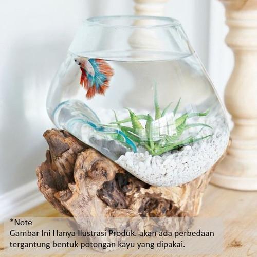 Foto Produk Akuarium ikan glass wood aquarium terrarium kayu besar 20cm Home Decor - L dari D&A Mart