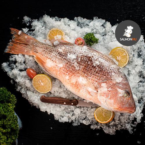 Foto Produk Ikan Jenaha / Jenahak / Snapper SEGAR Size 1 sd 1,5kg per Ekor dari Salmon Hu Jakarta
