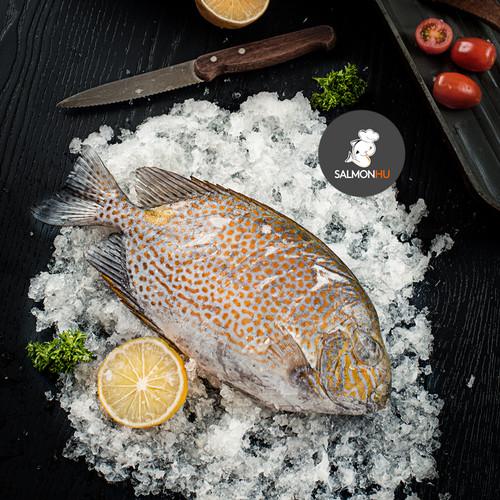 Foto Produk Ikan Baronang / Rabbitfish SEGAR Size 400 sd 800gr per Ekor dari Salmon Hu Jakarta