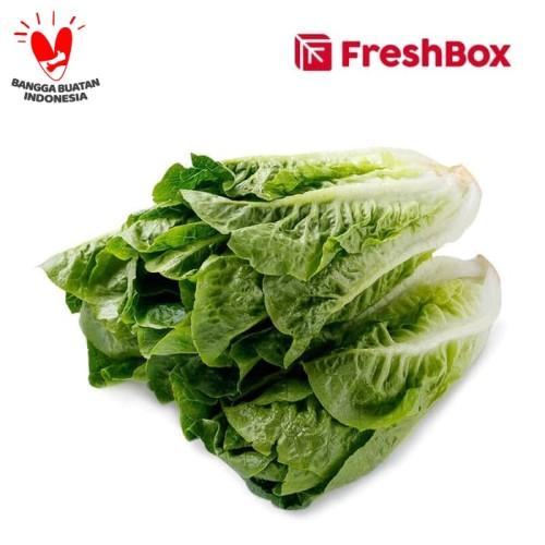 Foto Produk Romaine Lettuce 500 gr FreshBox dari FreshBox