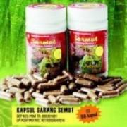 Foto Produk Sarang Semut Kapsul dari Bekasi Herba Center