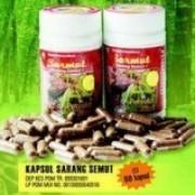 Foto Produk sarang semut kapsul dari Jakarta Herbal Center