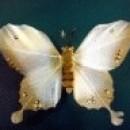 Foto Produk Kupu-kupu (Putih) dari Perdana Shop