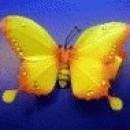 Foto Produk Kupu-kupu Kuning) dari Perdana Shop