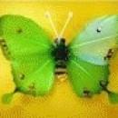 Foto Produk Kupu-kupu (Hijau) dari Perdana Shop