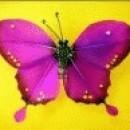 Foto Produk Kupu-kupu (Pink) dari Perdana Shop
