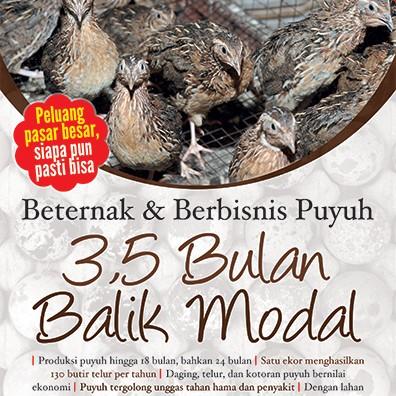 Foto Produk Beternak & Berbisnis Puyuh 3,5 Bulan Balik Modal dari Toko Kutu Buku