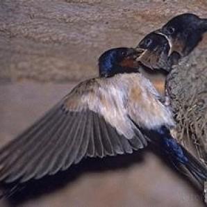 Foto Produk Peluang Usaha Walet - Mendatangkan Burung Walet dari DuniaCentra