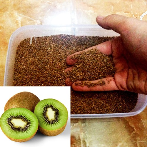 Foto Produk 200 Benih Biji Bibit Kiwi Hijau Actinidia deliciosa dari Biji Benih