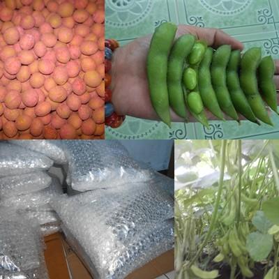 Foto Produk Benih Kedelai Edamame, 1 kg benih edamame ada sekitar 2500 butir. dari Widy Jember78