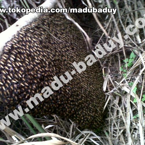 Foto Produk Gallery Foto Madu Asli Hutan Baduy dari Madu Baduy
