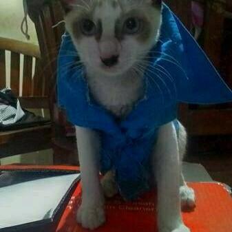 Foto Produk baju kemeja biru tanpa lengan untuk baju kucing size s dari alhamdulillahshop