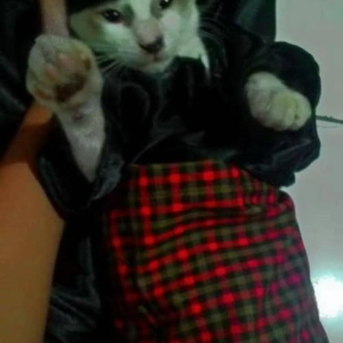 Foto Produk peci untuk kucing dari alhamdulillahshop