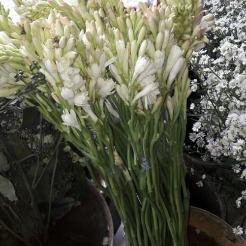 Foto Produk Bunga Sedap Malam dari Freshcut Flower