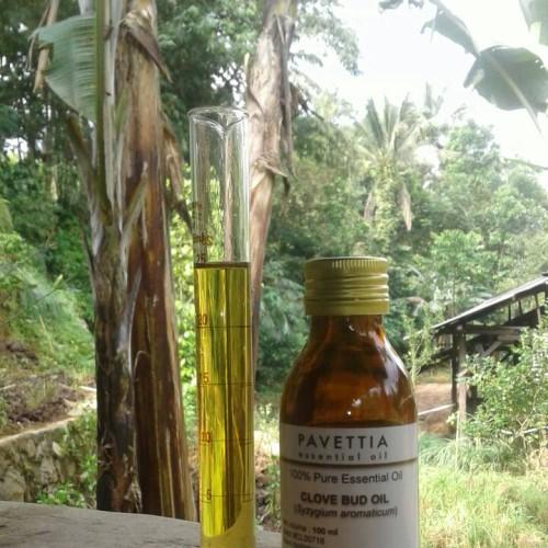 Foto Produk 100 ml - minyak atsiri bunga cengkeh / clove bud essential oil dari pavettia essential oil