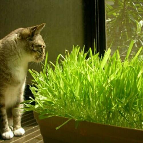 Foto Produk makanan kucing dari TOKO-AMH