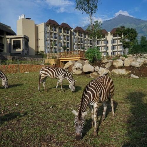 Foto Produk Voucher Baobab Safari Resort Prigen PROMO WEEKDAY dari b3nz travel