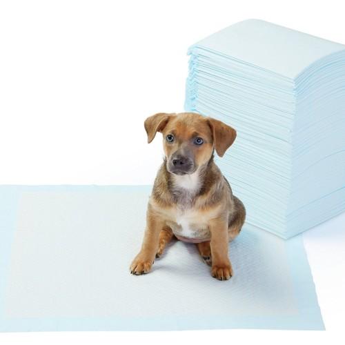 Foto Produk Pee Pad Training Popok Anjing Kucing Serap Air dari Hime petshop