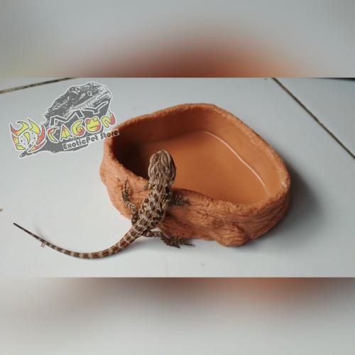 Foto Produk Water Dish Medium Natural Tempat Minum Reptil Waterdish dari MYDragon