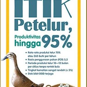 Foto Produk Beternak Itik Petelur, Produksi Hingga 95% dari Toko Kutu Buku