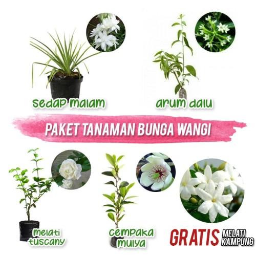 Foto Produk Paket Tanaman Bunga Wangi dari Barokah Florist Official