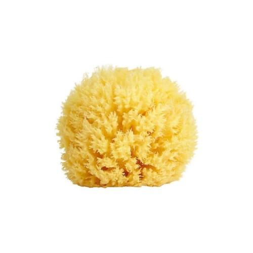 Foto Produk Bellini - Honeycomb Natural Sea Sponge SIZE 10 dari Chubby Baby Shop