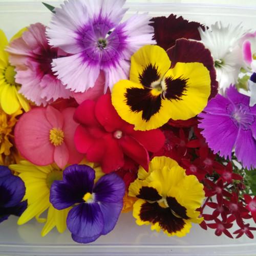 Foto Produk Mix edible flower dari MagnoFlorist