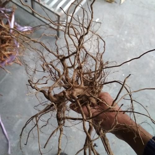 Foto Produk Akar kayu aquascape senggani dari ONDOFISH