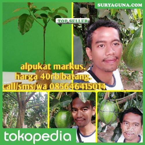 Foto Produk Alpukat Jumbo Markus dari SuryaGuna