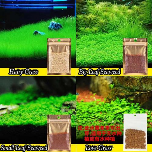 Foto Produk Bibit Big Leaf Seaweeds Aquascape dari saungikan juga