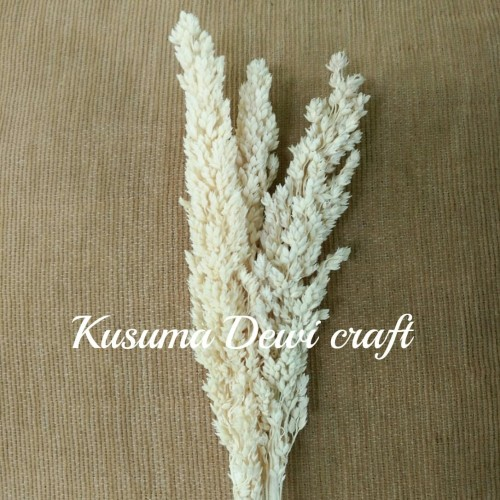 Foto Produk Bunga cantel putih dari Kusuma Dewi Craft