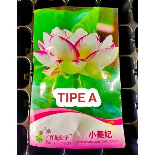 Foto Produk Tipe A Benih Biji Bibit Lotus Seroja Nelumbo nucifera Retail Pack dari Biji Benih