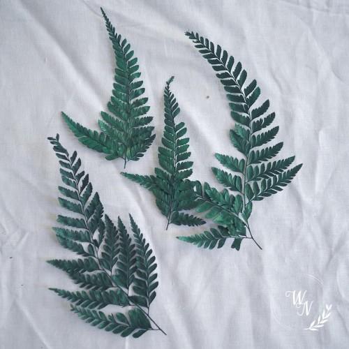 Foto Produk DAUN PAKU KERING - DAUN PAKU - DAUN PAKIS - DAUN - MAHAR - RUSTIC dari WIRUNAMA