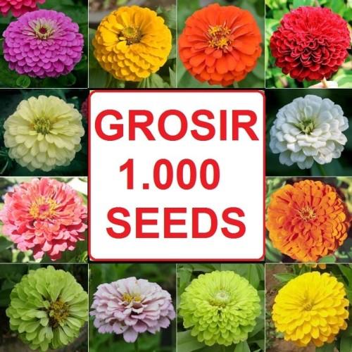 Foto Produk GROSIR 1000 Biji Benih Bibit Zinnia Mix Bunga Tumpuk dari Biji Benih