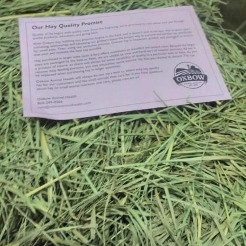 Foto Produk Makanan kelinci guinea pigs OXBOW Orchard hay 1kg Setara Rumpu Timothy dari gudang kelinci