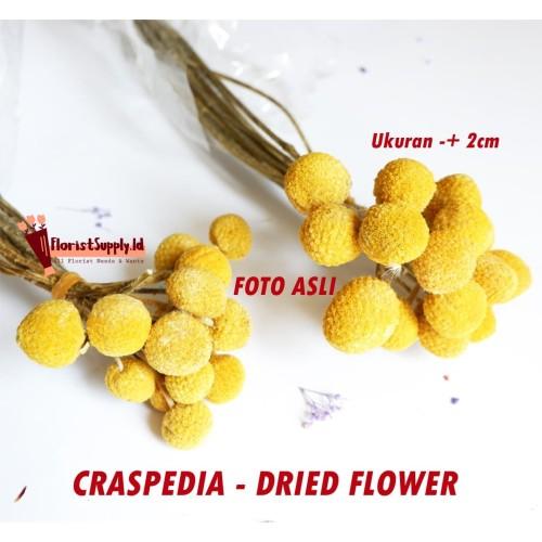 Foto Produk [5 Pcs] Craspedia Dried Flower / Bunga Kering / Preserved Flower dari Floristsupply