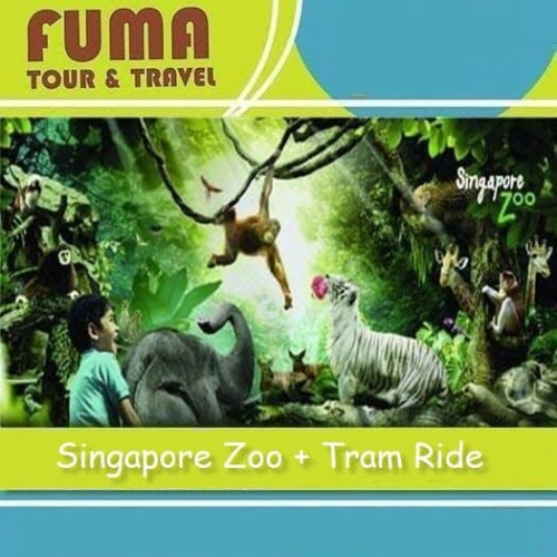 Foto Produk Tiket Singapore Zoo + Tram Ride - Dewasa dari Fuma Tour
