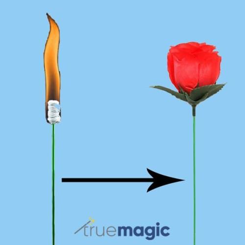 Foto Produk Torch to Rose (Alat Sulap Bunga Mawar Api) dari True Magic